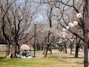 ようやく咲き始めた桜の下で早くもお花見の宴